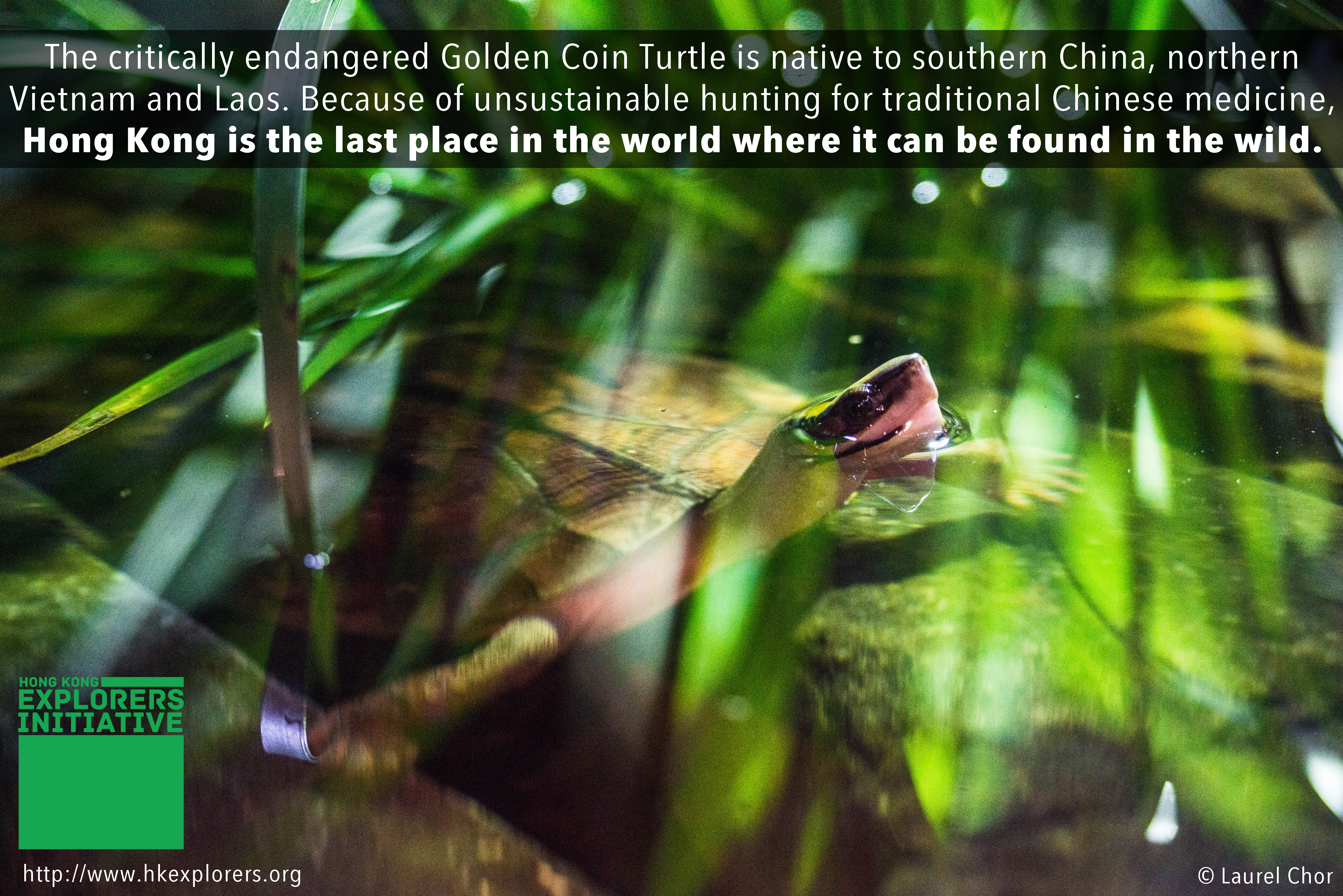 Golden Coin Turtle Spa